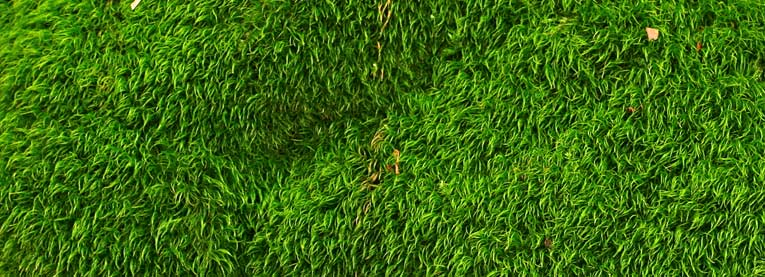 Green Roofing Example